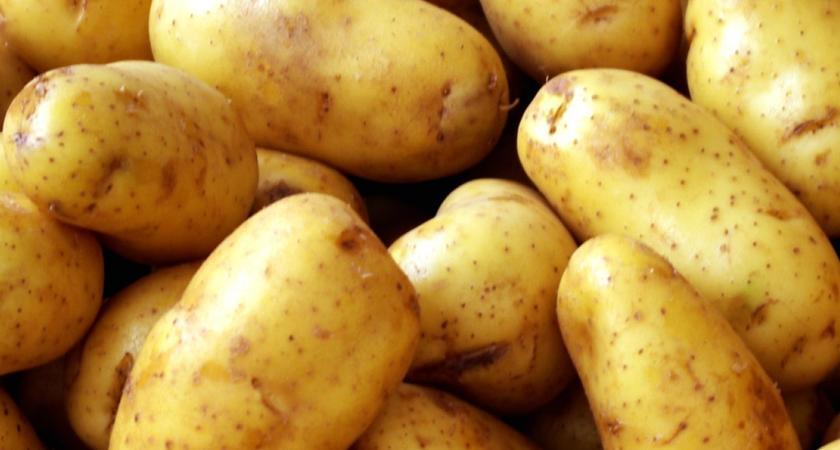 Спасете картофите от разваляне